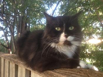 https://www.victoriaclaytonwriter.com/wp-content/uploads/2020/08/www.victoriaclaytonwriter.com-Dougal-cat-plan.jpg