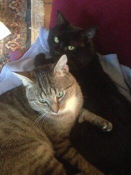 New cats www.victoriaclaytonwriter.com